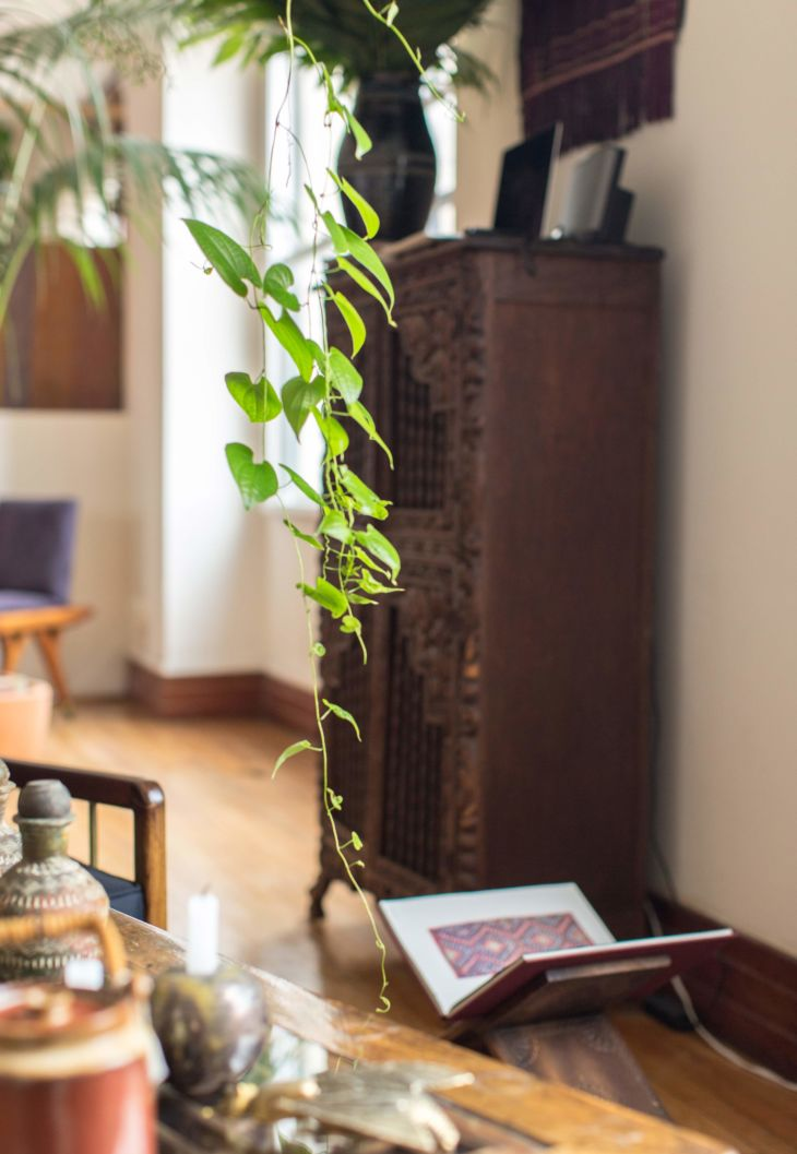 Indoor plants and antique cupboard